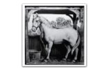 White Horse & Bower London Footer Logo